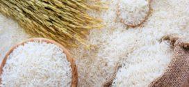 ২০৫০ সনের মধ্যে চালের উৎপাদনশীলতা দ্বিগুণ করা হবে: কৃষিমন্ত্রী