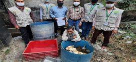 খুলনার বটিয়াঘাটায় ৫৩টি সাউন্দি কচ্ছপ উদ্ধার