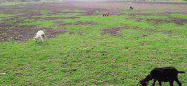 খননের দেড় বছরের মধ্যই নদী এখন সমতল ভূমি!