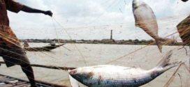 টানা দুই মাস অভয়াশ্রমে ইলিশসহ সকল প্রকার মাছ ধরা নিষিদ্ধ