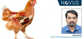 Nutritional strategies for poultry gut health in antibiotic-free production