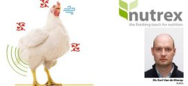 Impact of heat stress on poultry