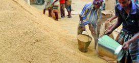 ধানের দামে সিন্ডিকেট: নওগাঁর কৃষকদের অসন্তোষ