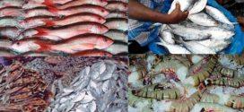 খুলনাঞ্চল থেকে গত অর্থবছরে ২৪১৫ কোটি টাকার মাছ রপ্তানি