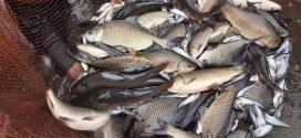 বটম ক্লিন পদ্ধতিতে মাছ চাষে যেসব কারণে লাভ-ক্ষতি হয়